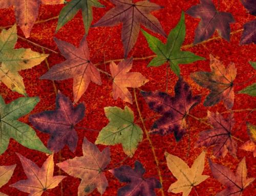 Start der Herbstkurse